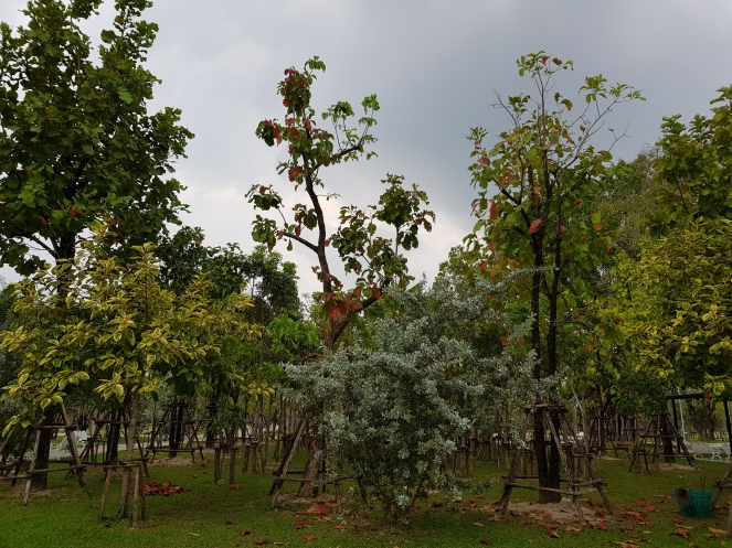 Benjakitti Park