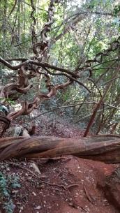 fikuśne drzewo