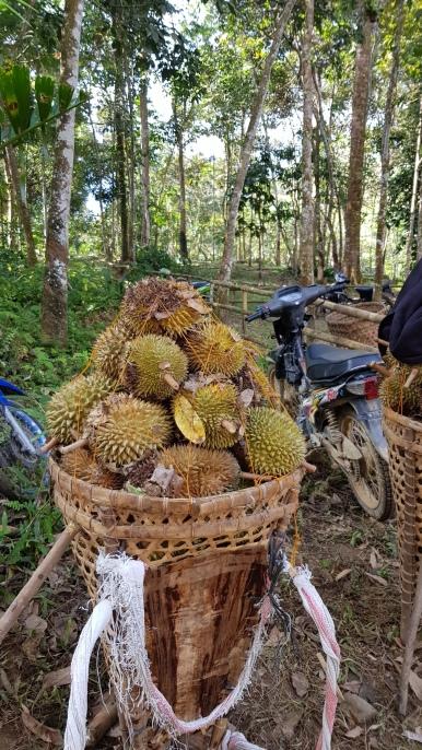 sezon na duriana w pełni