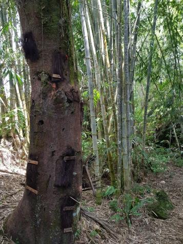 grób noworodków w drzewie